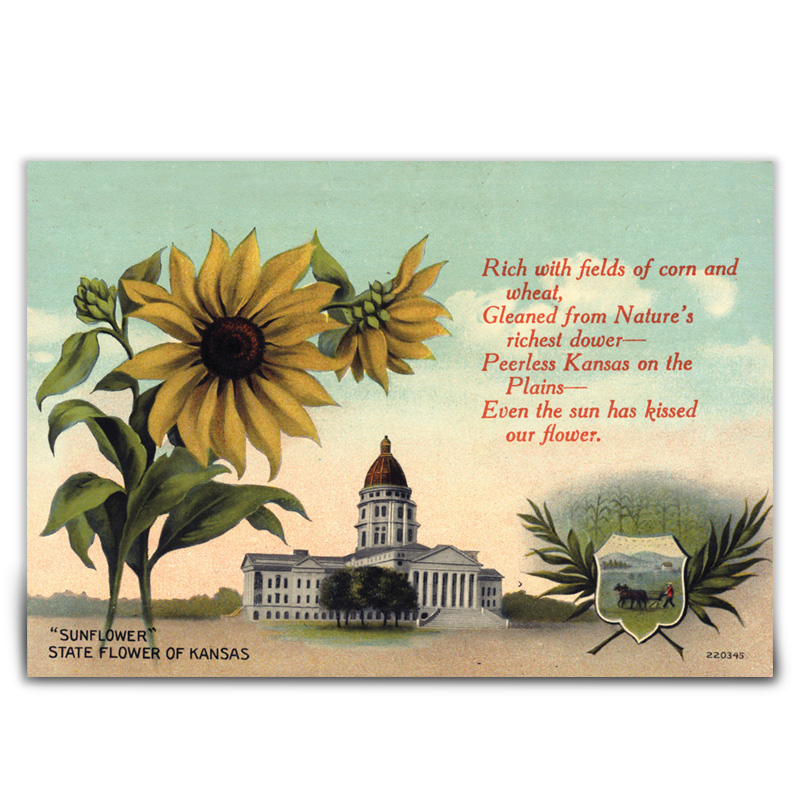 Sunflower Postcard 1936
