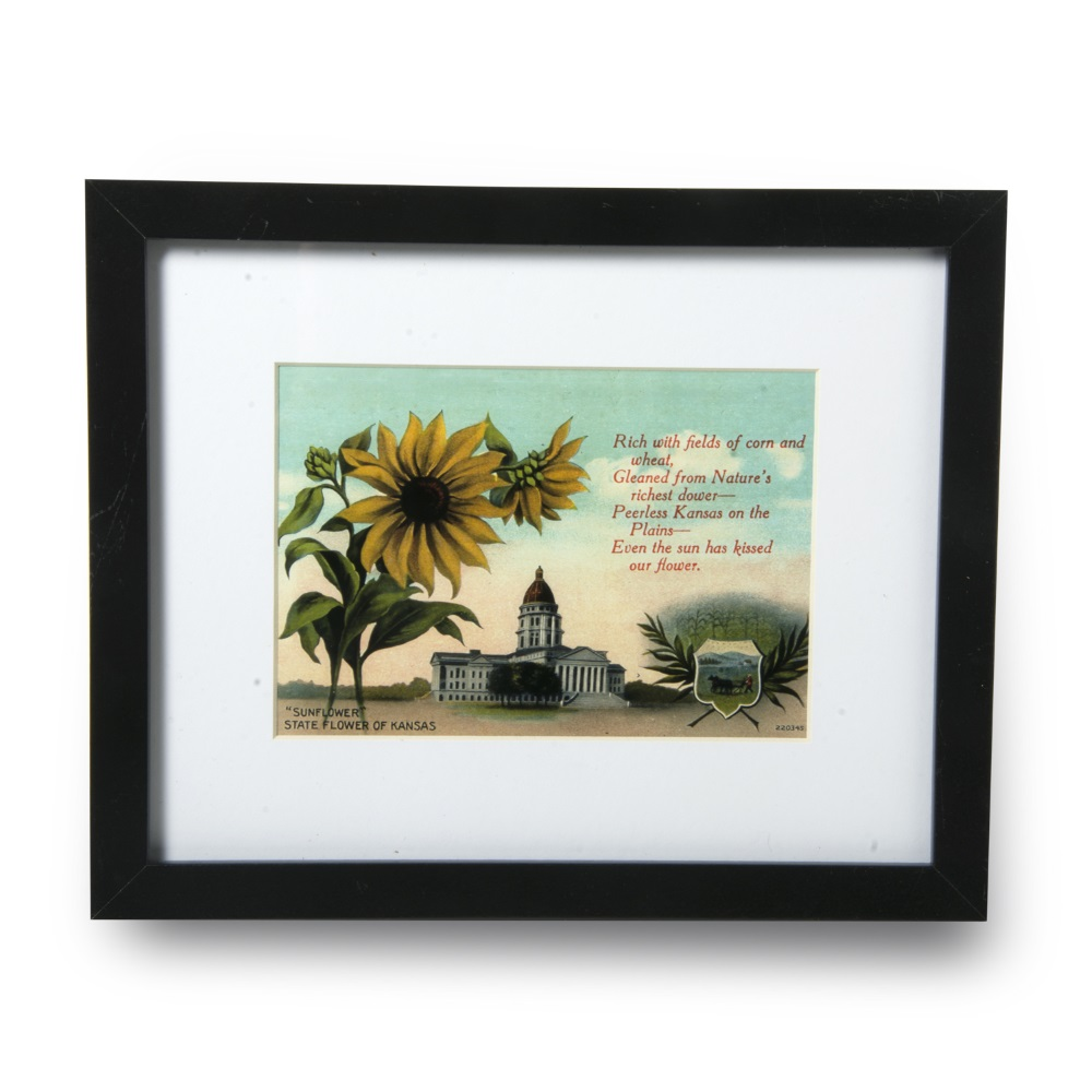 Framed Sunflower postcard
