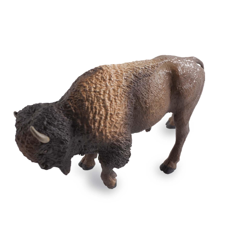 Bison,100152