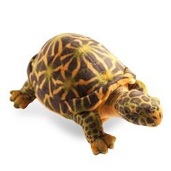 Stuffed Box Turtle